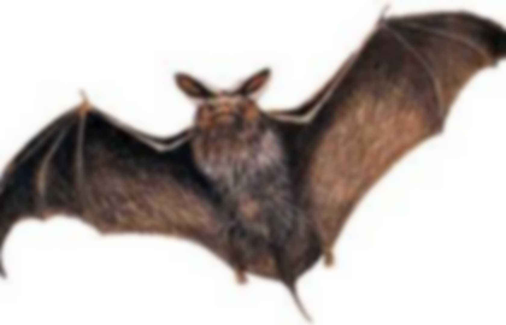 Bat Detectors Pearltrees Detector Schematics To Make A