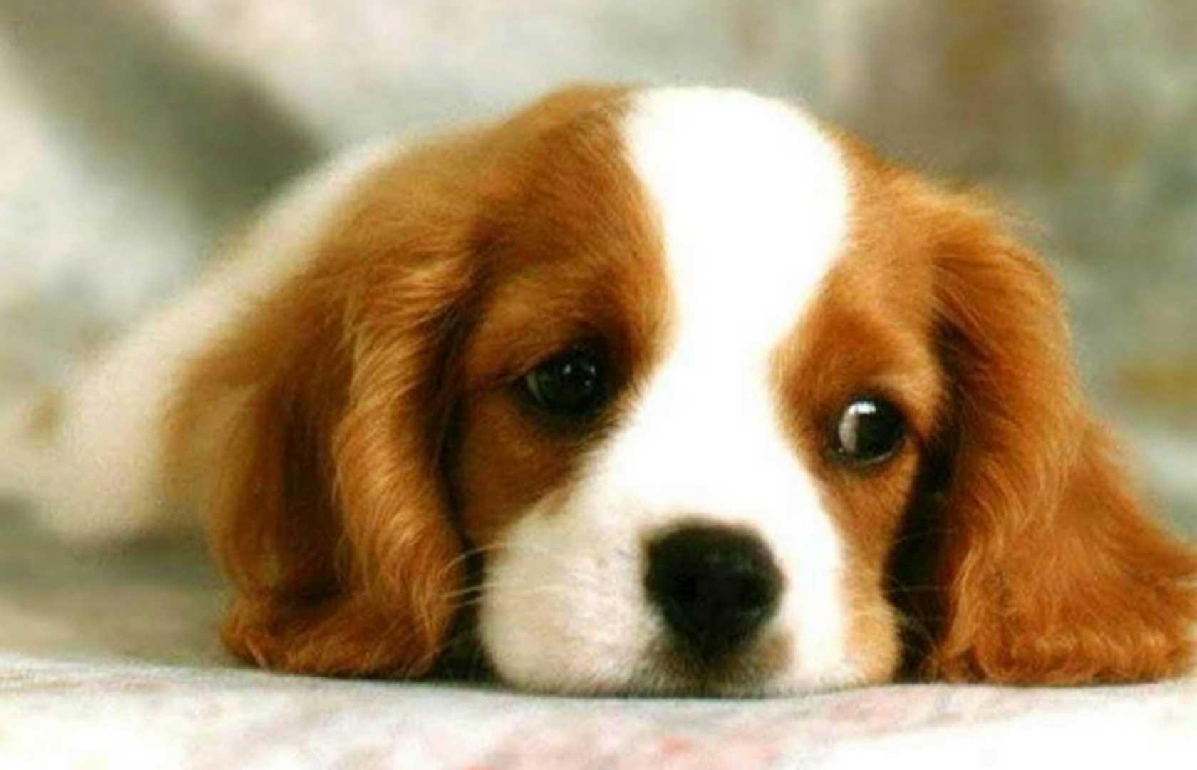 betadine jaune chien