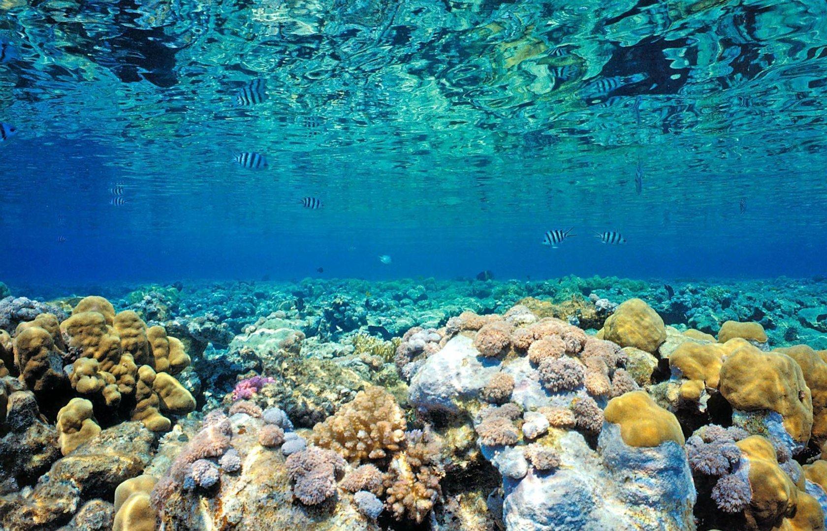 Coral Reefs - bpsweblinks | Pearltrees