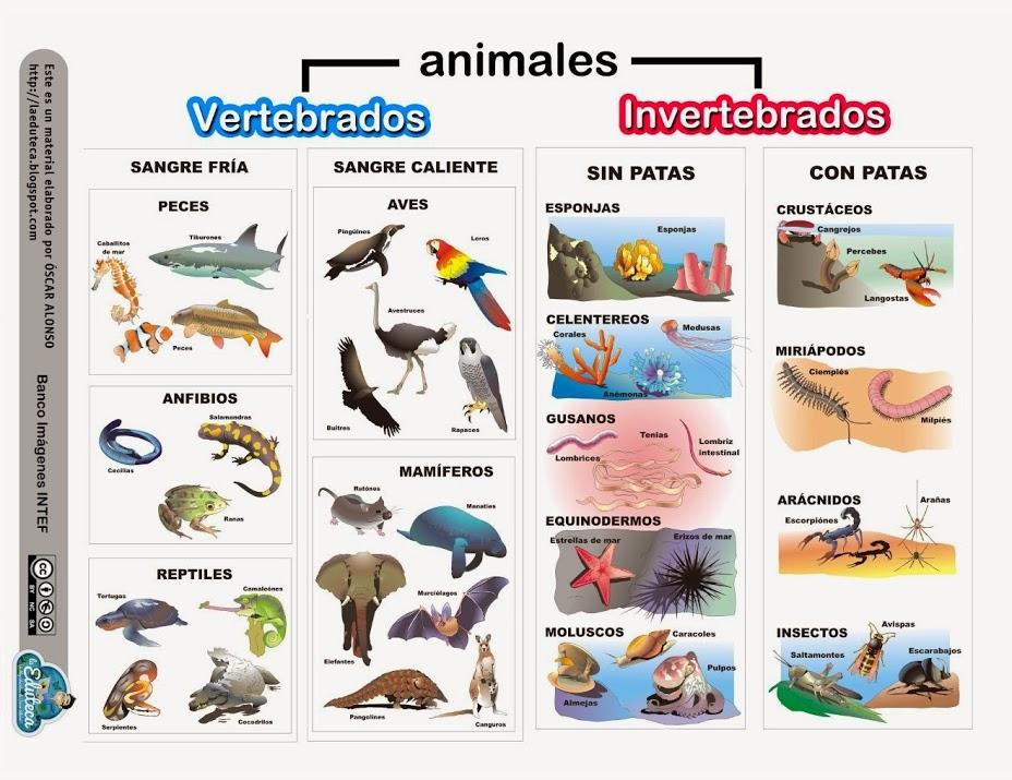 In Vertebrados e invertebrados.