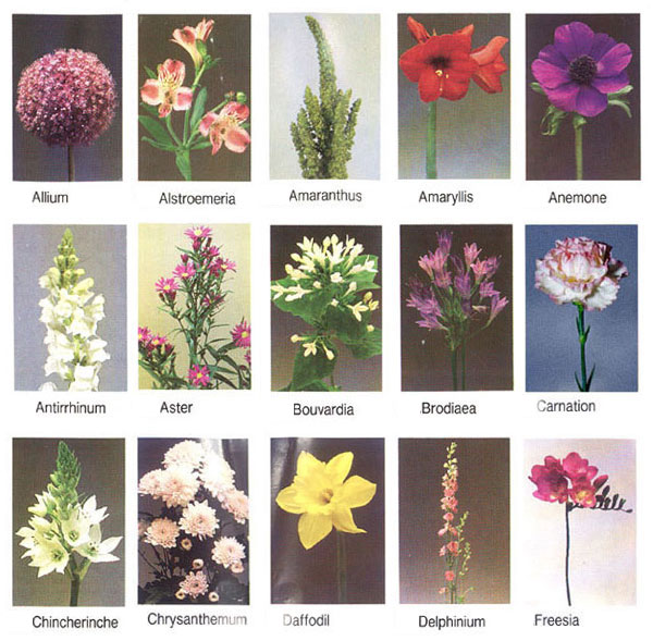 flowerstypes  pearltrees, Natural flower