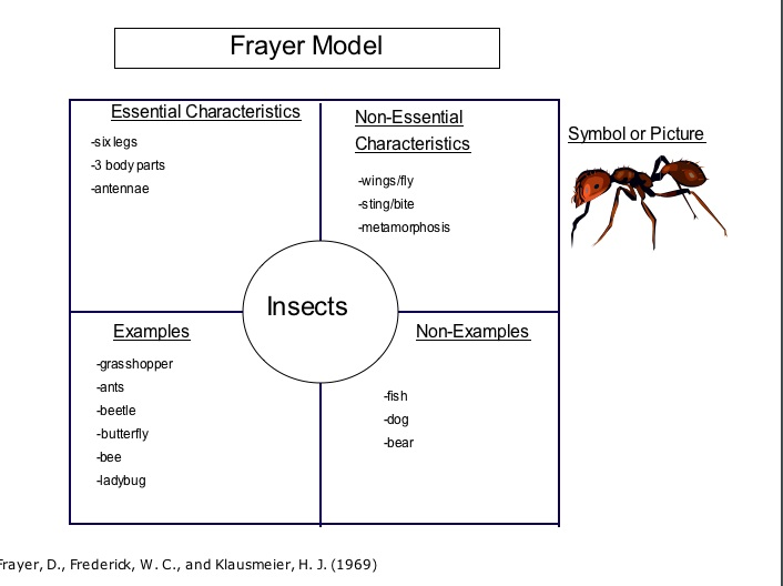 Frayer Model Insects Pearltrees
