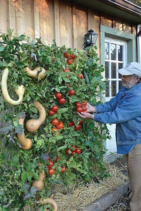 Samller Scale Diy Vertical Garden Pearltrees