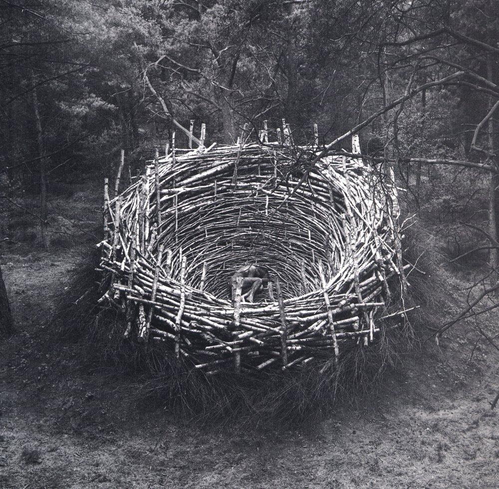nils udo le nid1978 terre pierres bouleaux et herbe