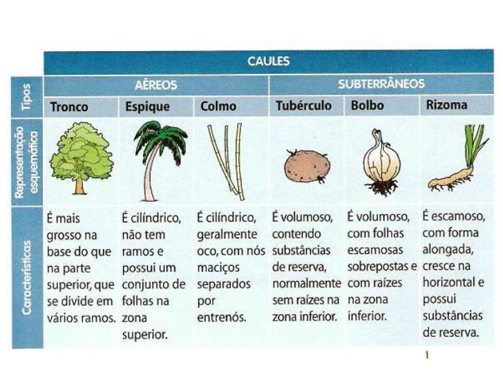 Tipos de caule | Pearltrees Trees