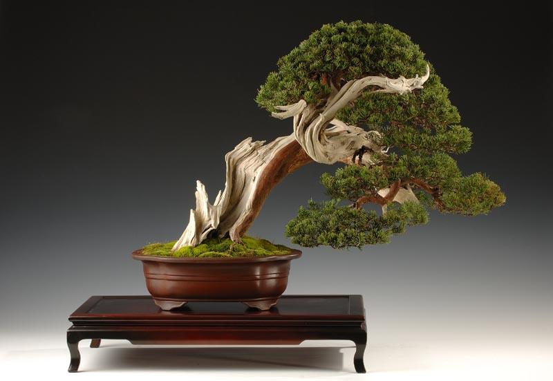 Yamadori | Pearltrees
